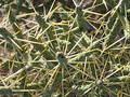 Desert Cacti Stock Images