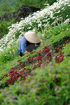 Asian Flower Worker In Garden Stock Photos - Image: 1201613