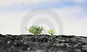 Green Sprout Royalty Free Stock Photo - Image: 12129675