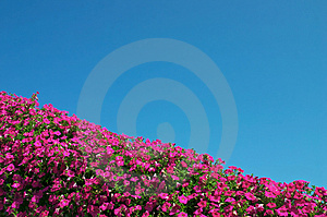 Flowers and sky Free Stock Photography