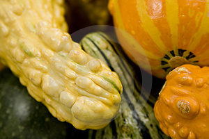 Gourd Time Royalty Free Stock Photo - Image: 1225925