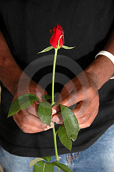 Rose For You Royalty Free Stock Photos - Image: 1248458