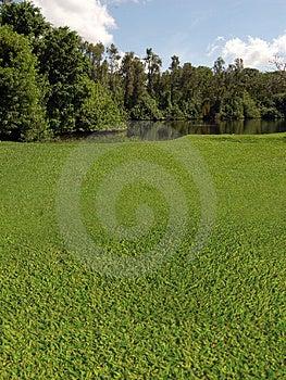 Поле для гольфа с взглядами озера Стоковые Изображения - изображение: 1261514