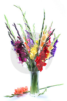 Gladiolas Royalty Free Stock Images