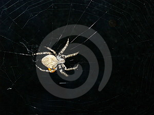 Spider Royalty Free Stock Photo - Image: 1288445