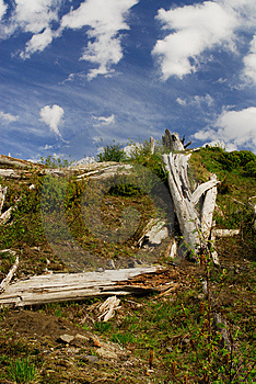 Destroyed Trees Stock Images - Image: 1292484