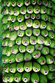 Bananas Stock Photography - Image: 1297052