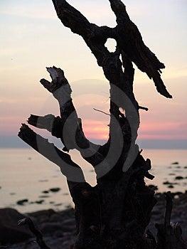 Εμπλοκή στην παραλία Στοκ Εικόνα