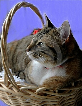 Kitten In Basket Lizenzfreies Stockbild
