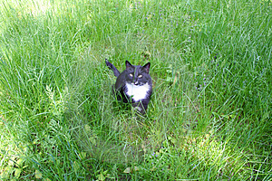 Cat In The Grass Stock Photos