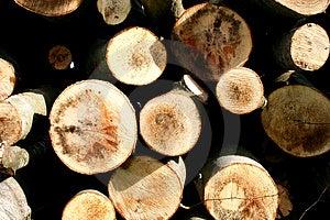 Wood-Macro Stock Photography