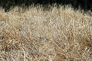 Field Grass 2 Stock Image