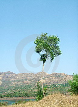 A Lone Tree Free Stock Photos