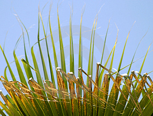 Palm Leaves 2 Royalty Free Stock Photography