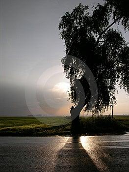 Silhueta de uma árvore só Fotografia de Stock Royalty Free