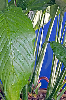 Wet Plant Free Stock Photography