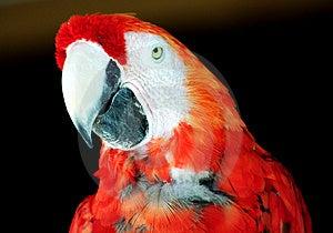 Parrot Free Stock Photo
