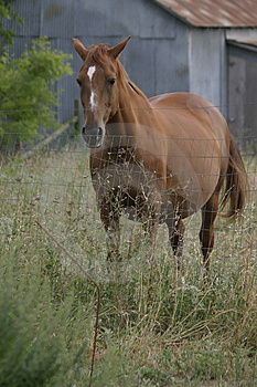 Broodmare Free Stock Photos