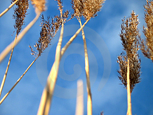 The grass has grown Stock Images