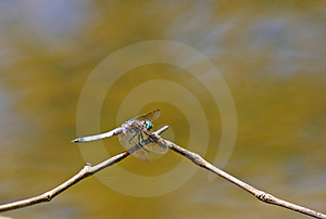 Dragon Fly Photos libres de droits