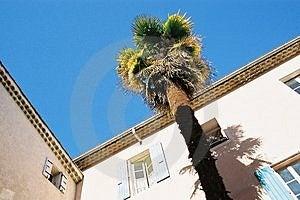 Palm Tree Free Stock Photography