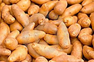 Potatoes Free Stock Image