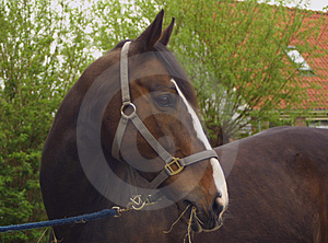 A Brown Horse Stock Photos