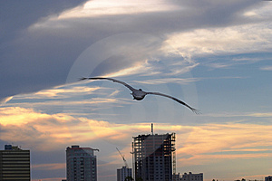 Pelican Sunset Free Stock Image