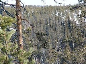 Karelian Spring Stock Image