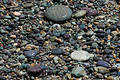 Shore Pebbles Stock Image