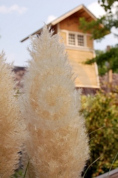 Fluffy Plant Royalty Free Stock Image - Image: 1300316