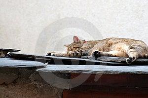Catnap Royalty Free Stock Image - Image: 1303996