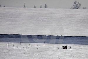Gloomy Frozen Landscape Royalty Free Stock Photography - Image: 13010507