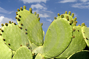 Cactus Stock Photography - Image: 1313612