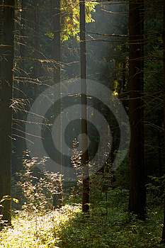 Sun in forest Stock Photos