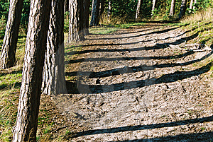 Trunks' Shadows Stock Photography - Image: 1320942