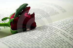 Red rose and book 2