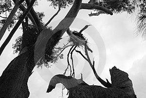 Eagles Nest Royalty Free Stock Image - Image: 1323036