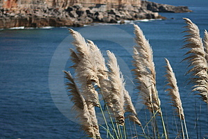 Coastal Vegetation Royalty Free Stock Image - Image: 1330896