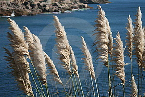Coastal Vegetation Royalty Free Stock Image - Image: 1331146