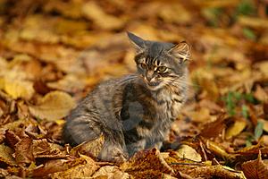 Lost Kitten Royalty Free Stock Photo - Image: 1343755