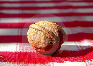 Wallnut Stock Photo - Image: 1344480