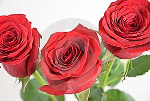 Three Red Roses Royalty Free Stock Photography - Image: 13409227