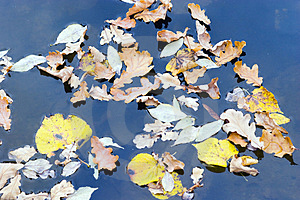 Floating Leaves Stock Photography - Image: 1351502