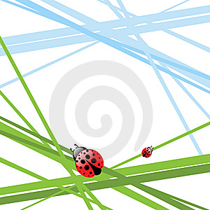 Grass With Ladybird Stock Images - Image: 13552324