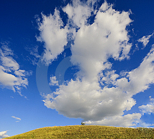 One Tree Stock Image - Image: 13554471