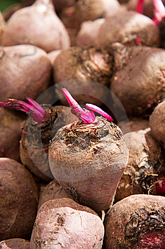 Beet Roots Royalty Free Stock Photos - Image: 13558808