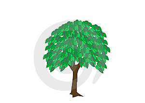 Tree_summer Royalty Free Stock Image - Image: 13559216