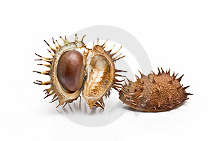 Chestnuts In Its Capsule. Stock Photos - Image: 13561443