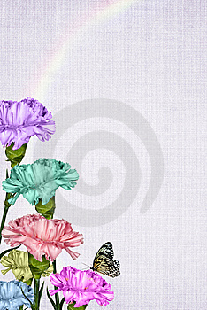 Rainbow Carnations Royalty Free Stock Images - Image: 13561649